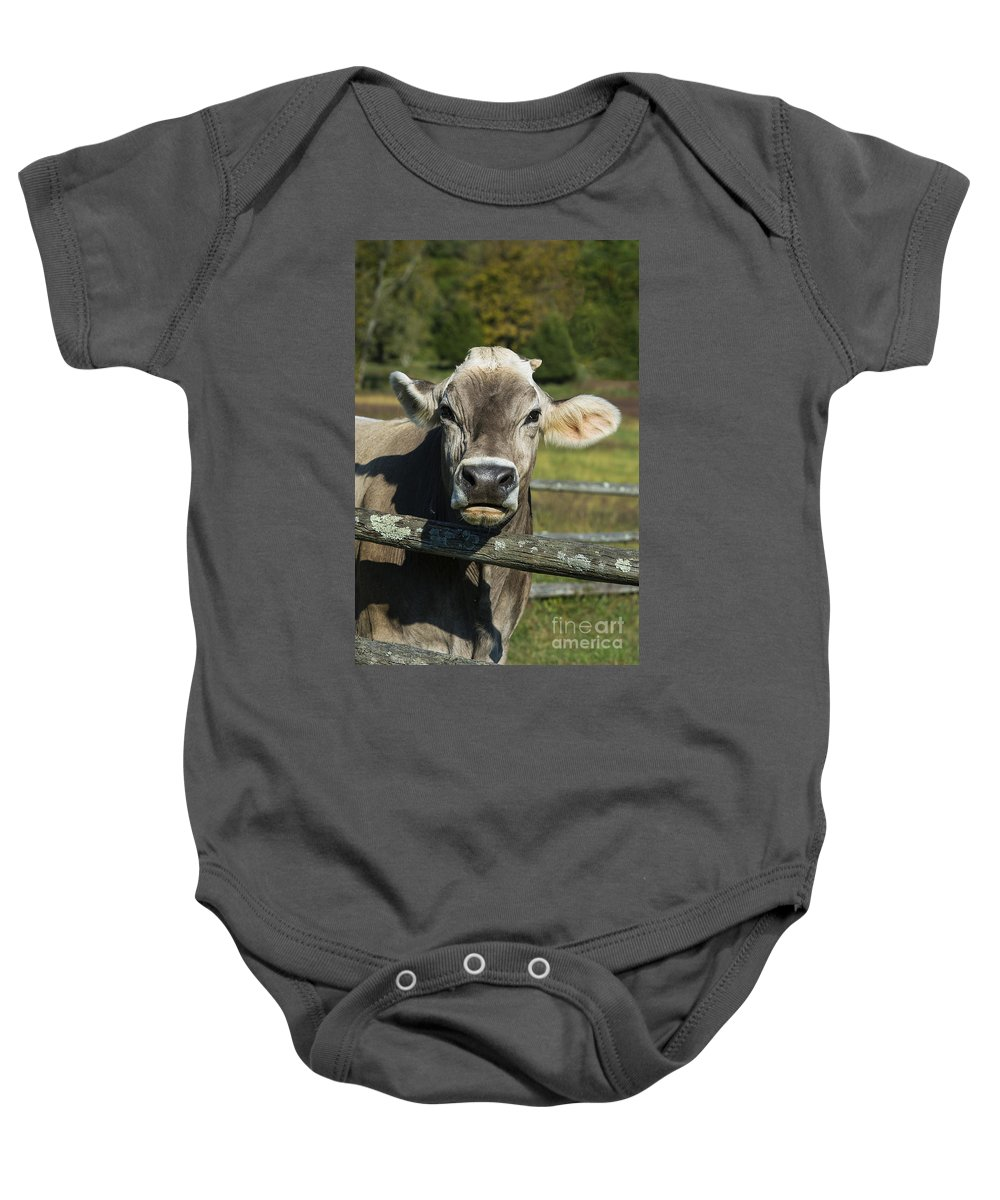 Brown Swiss Baby Onesie featuring the photograph Brown Swiss Cow by John Greim