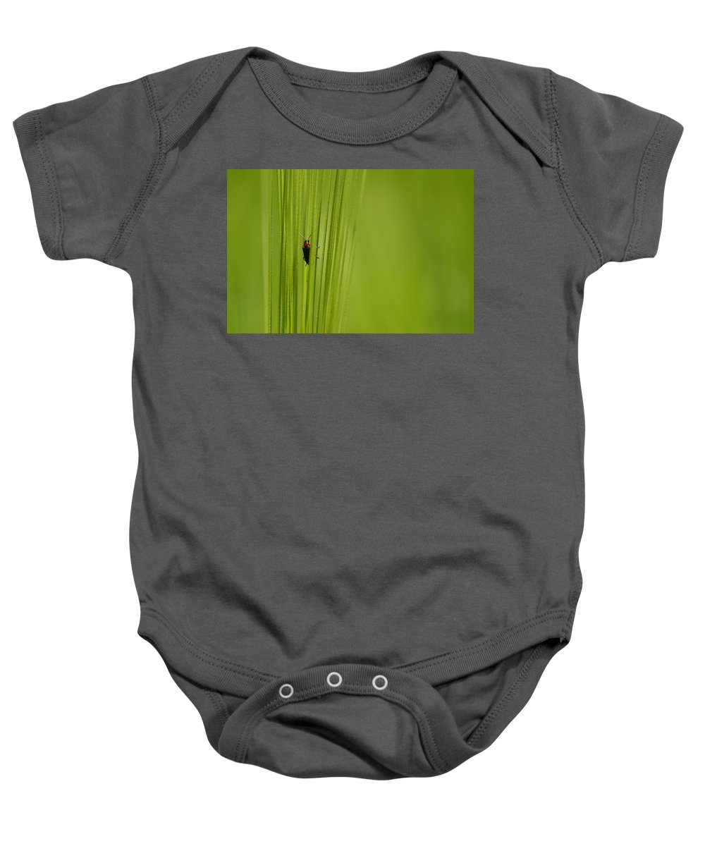 Spring Baby Onesie featuring the photograph Bug by TouTouke A Y