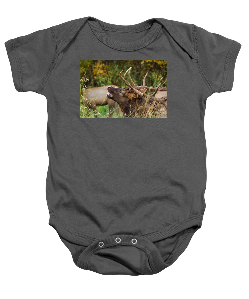 Wildlife Baby Onesie featuring the photograph Bugling Bull Elk by Patrick Shupert