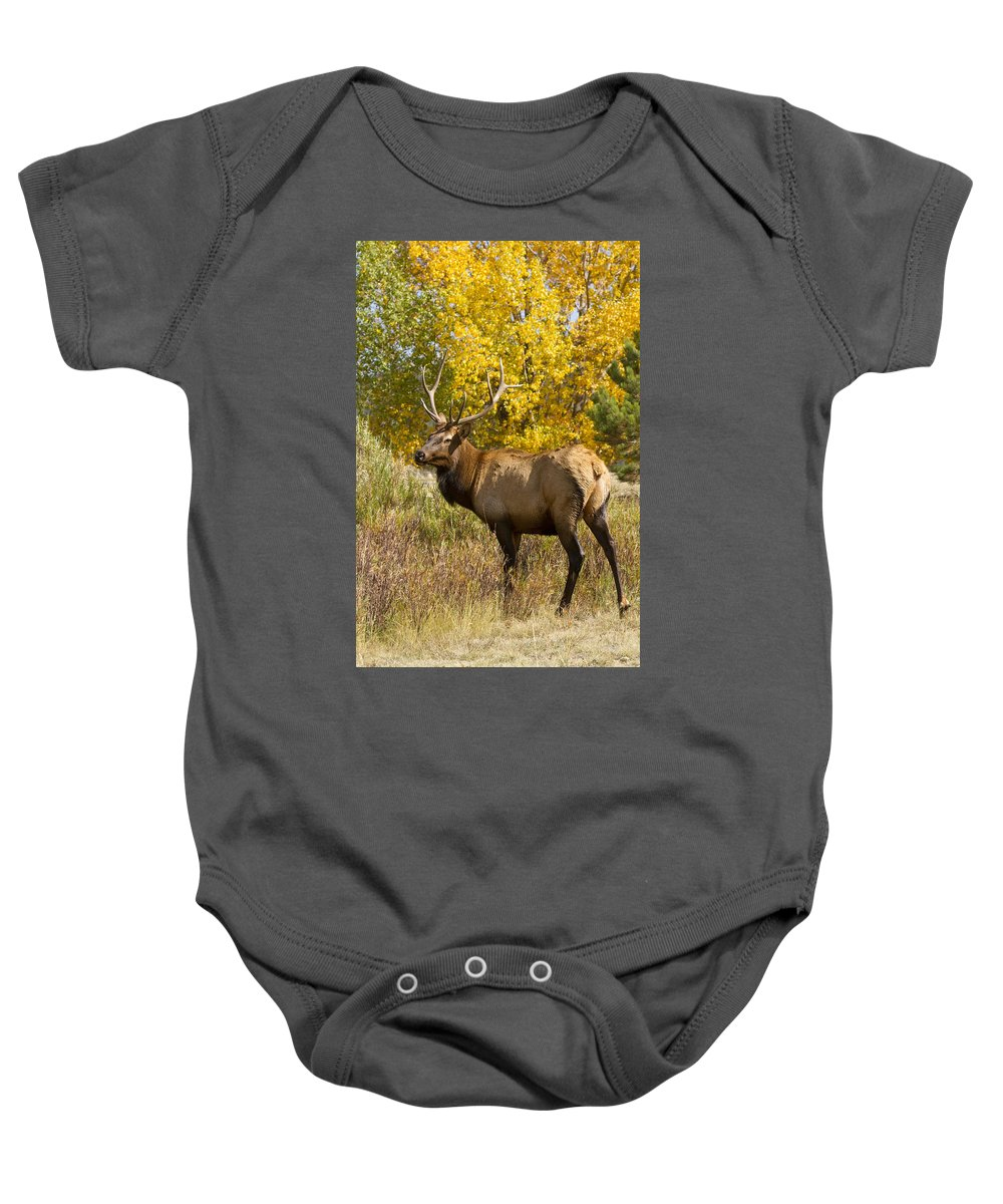 Elk Baby Onesie featuring the photograph Bull Elk With Autumn Colors by James BO Insogna