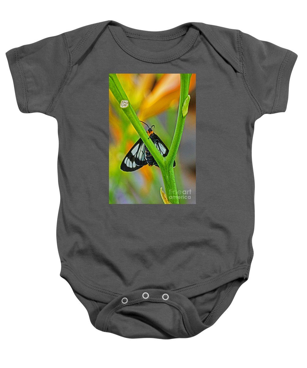 Butterflies Baby Onesie featuring the photograph Butterfly An3597-13 by Randy Harris