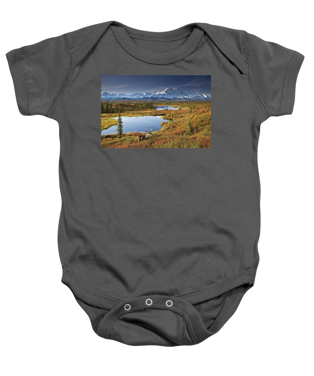 Adult Baby Onesie featuring the photograph Caribou On Tundra In Denali by John R DeLapp