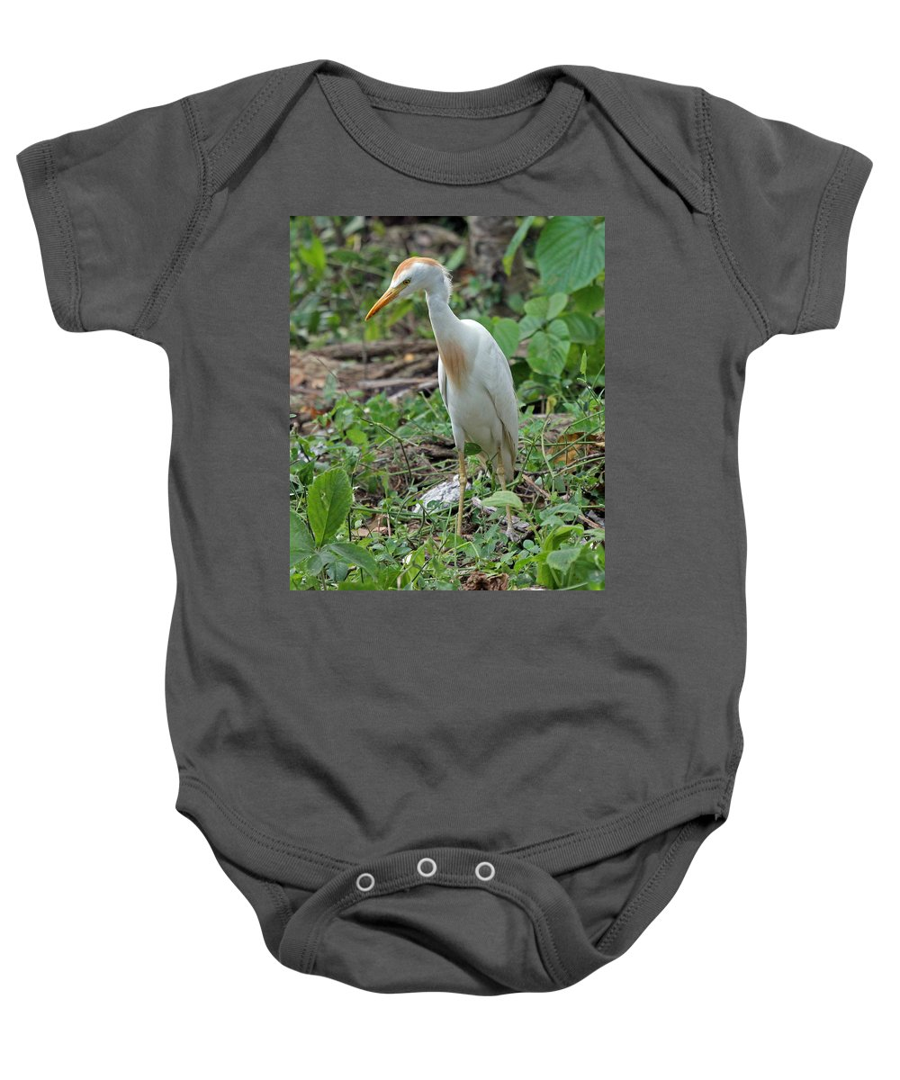 Bird Baby Onesie featuring the photograph Cattle Egret by Tony Murtagh