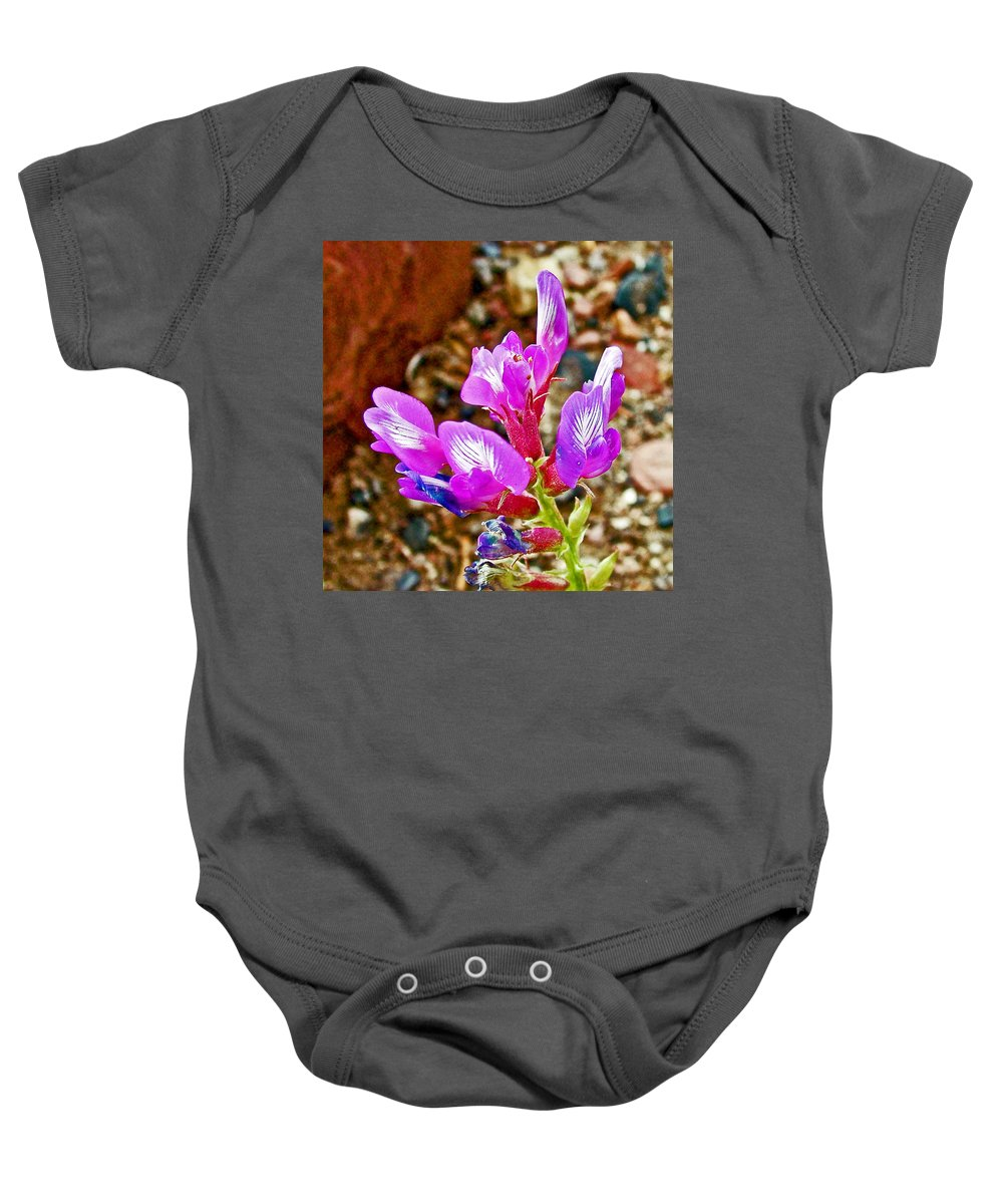 Chaparral Pea In Painted Desert Of Petrified Forest National Park Baby Onesie featuring the photograph Chaparral Pea In Painted Desert Of Petrified Forest National Park-arizona by Ruth Hager