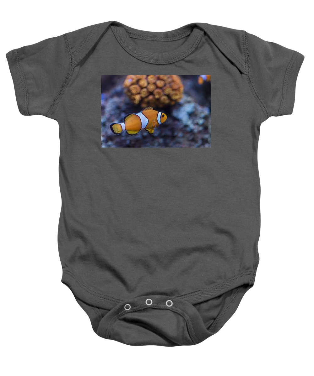 Anemone Baby Onesie featuring the photograph Clownfish by Paulo Goncalves
