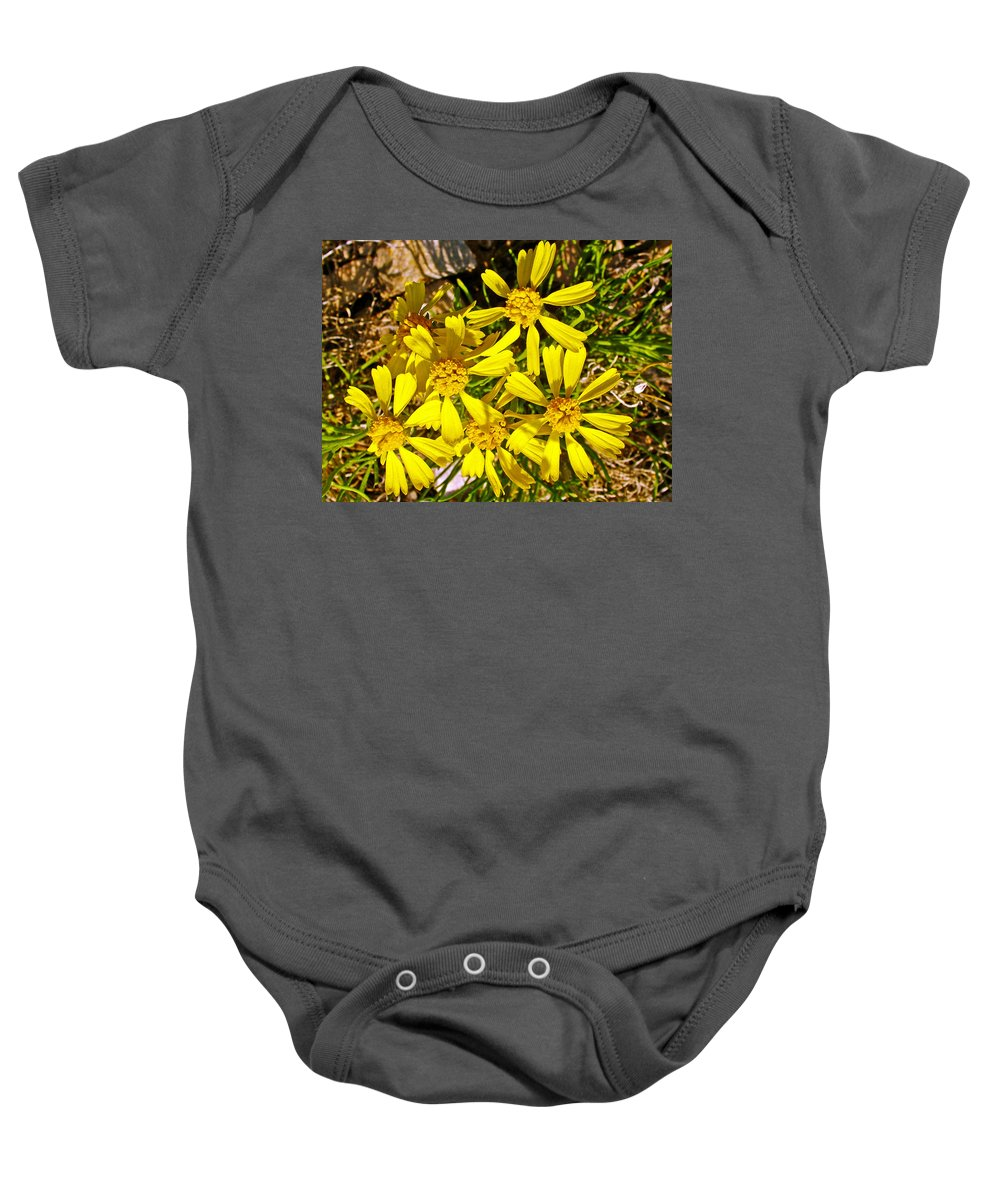 Common Madia On Sheep Creek Geological Loop In Flaming Gorge National Recreation Area Baby Onesie featuring the photograph Common Madia On Sheep Creek Geological Loop In Flaming Gorge National Recreation Area-utah by Ruth Hager