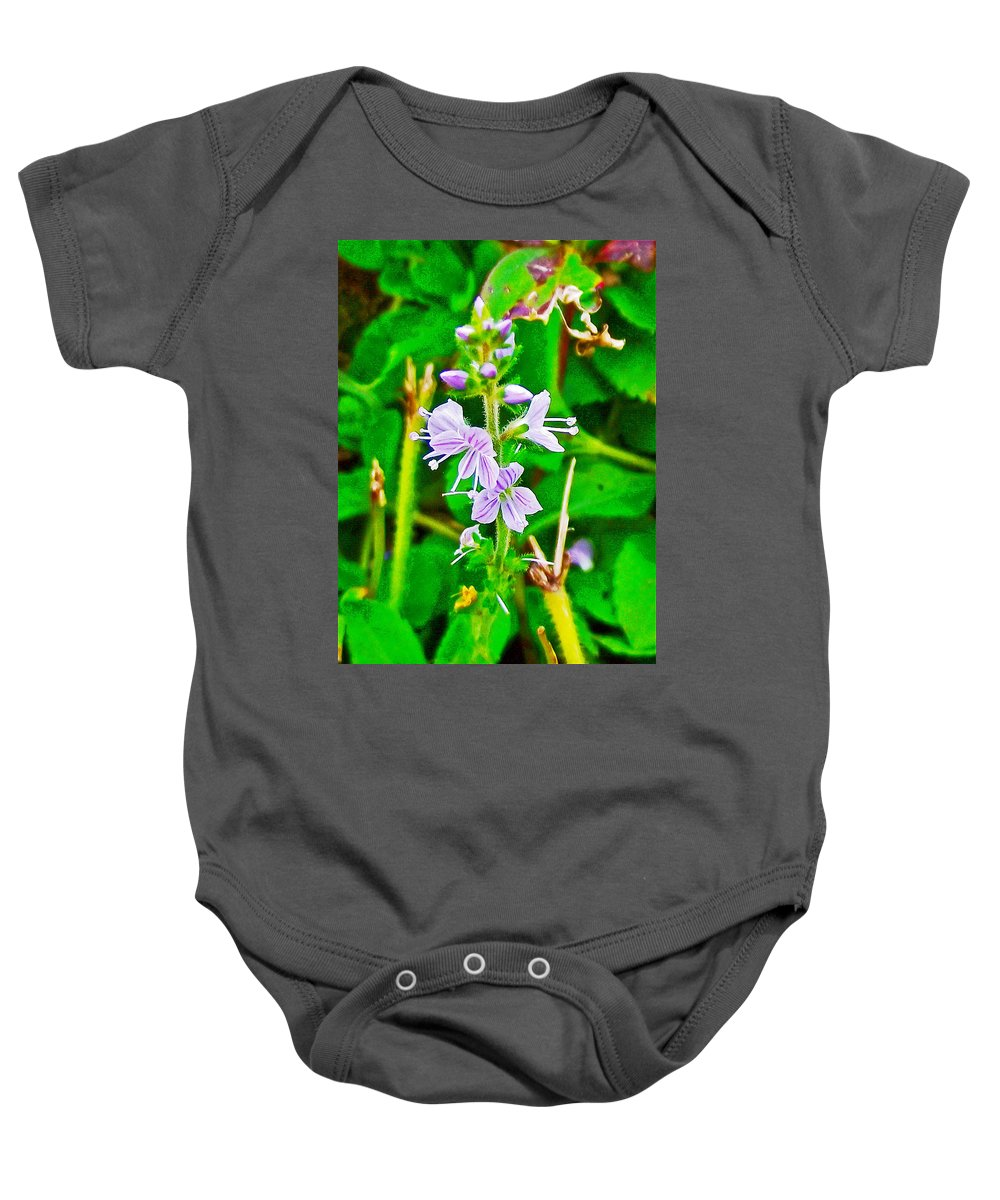 Common Speedwell On Skyline Trail In Cape Breton Highlands National Park Baby Onesie featuring the photograph Common Speedwell On Skyline Trail In Cape Breton Highlands National Park-nova Scotia by Ruth Hager