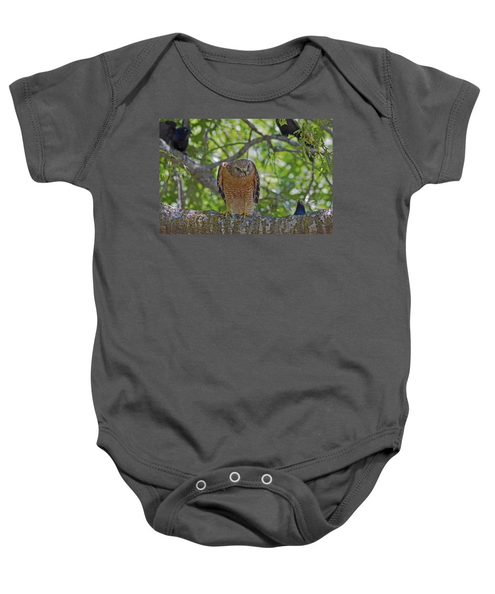 Concentration Baby Onesie featuring the photograph Concentration by Gary Holmes
