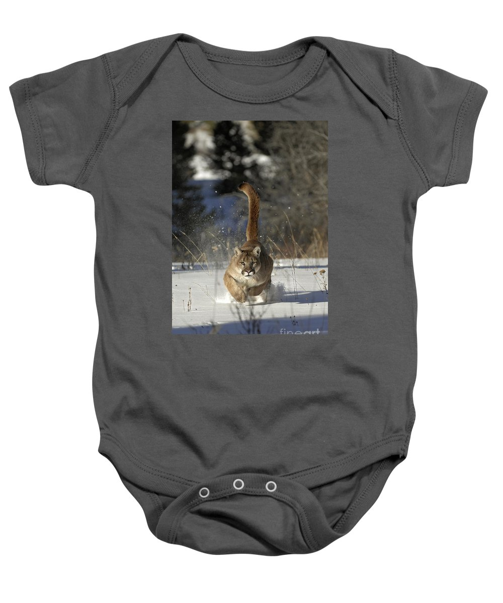 Mountain Lion Baby Onesie featuring the photograph Countdown by Wildlife Fine Art