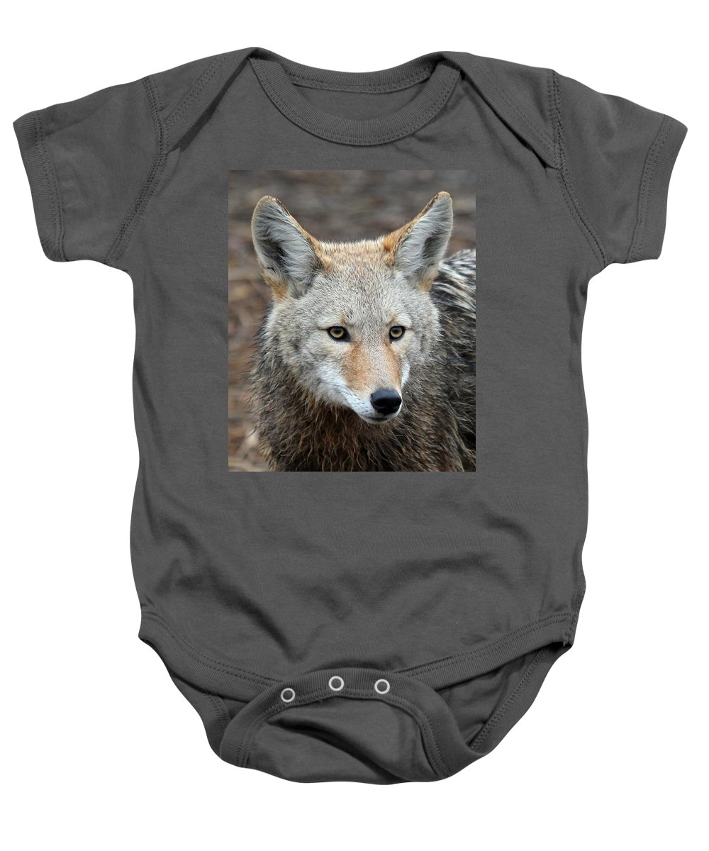 Coyotes Baby Onesie featuring the photograph Coyote by Athena Mckinzie