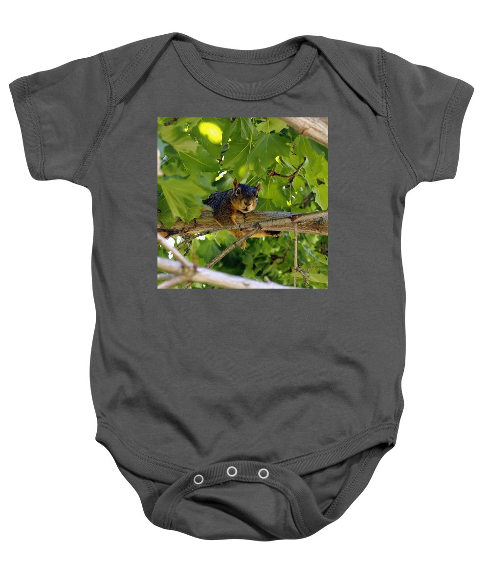 Nature Baby Onesie featuring the photograph Cute Fuzzy Squirrel In Tree by Amy McDaniel