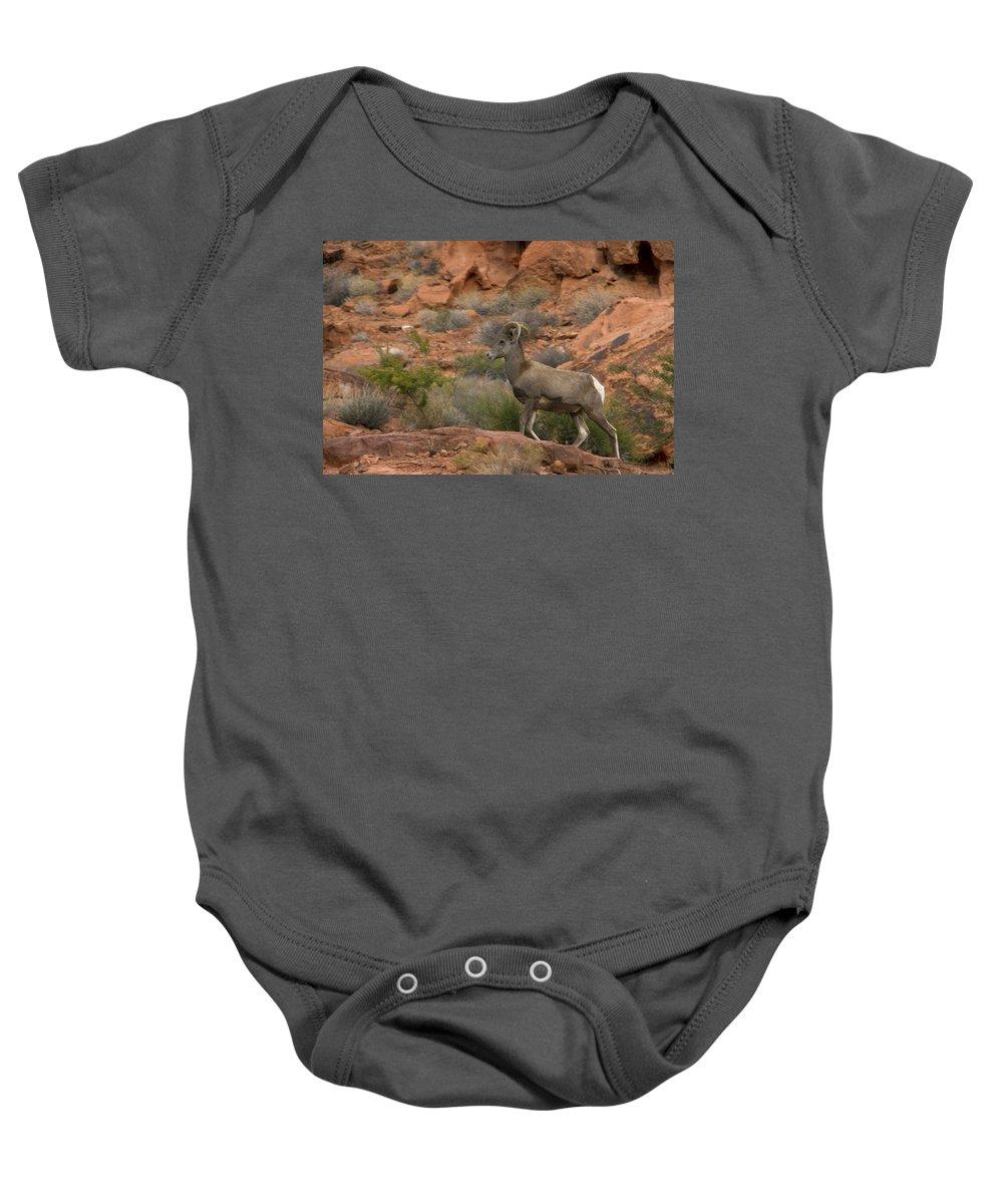 Desert Bighorn Sheep Baby Onesie featuring the photograph Desert Bighorn Sheep by Debby Richards