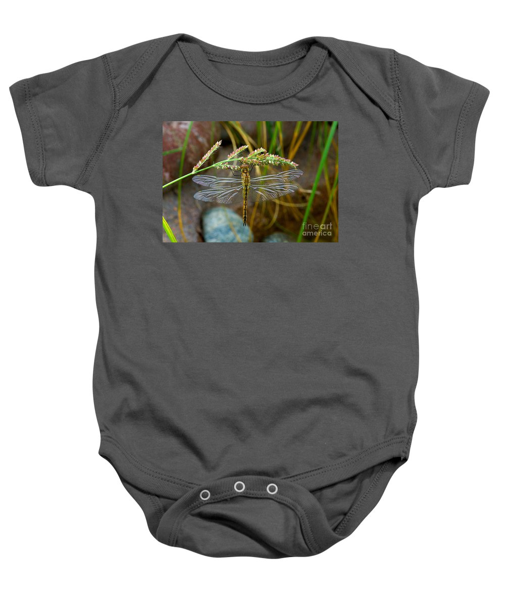 Dragonfly Drinking The Flower Nector Baby Onesie featuring the photograph Dragonfly X-ray by Mae Wertz