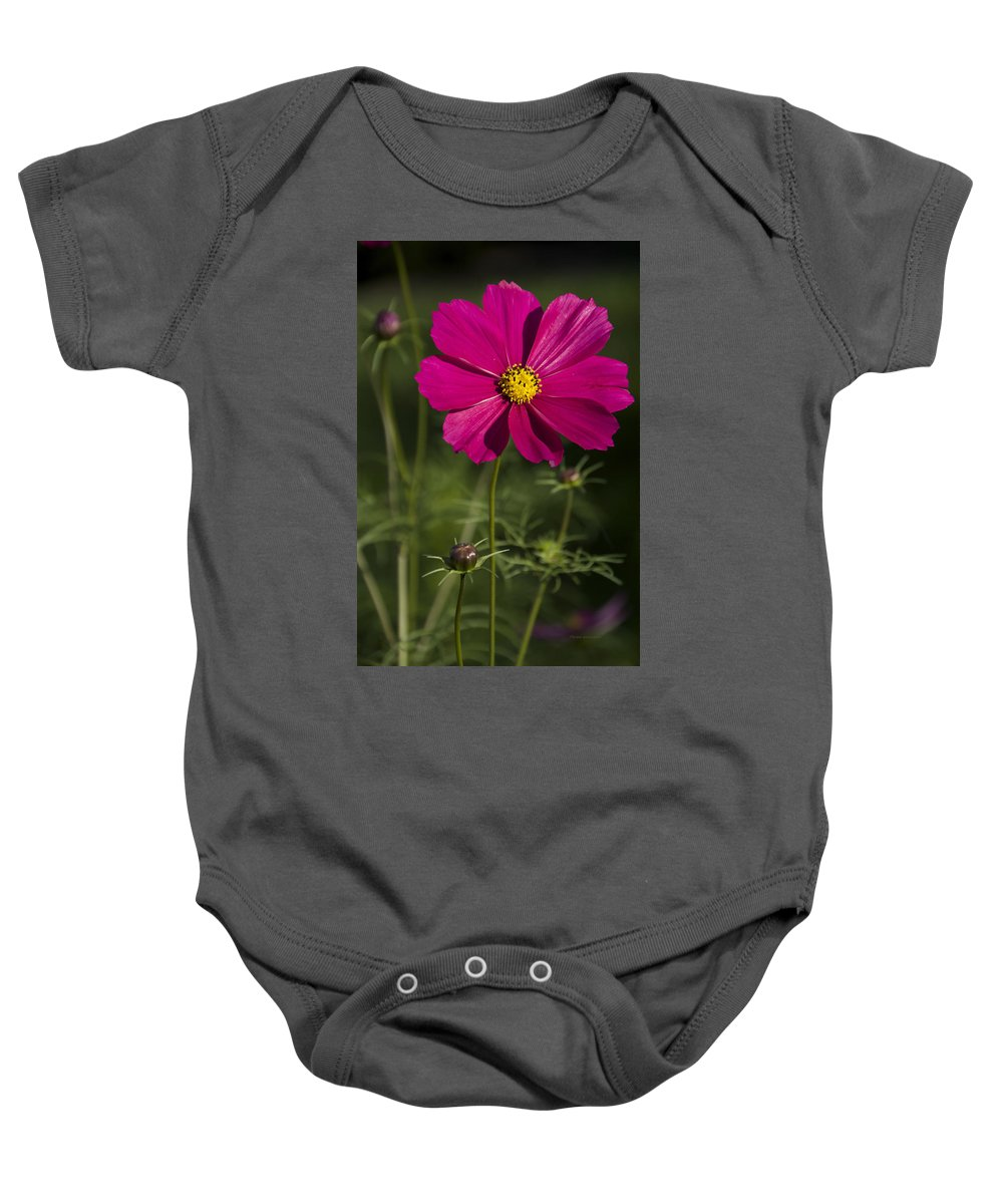 Flower Baby Onesie featuring the photograph Early Dawns Light On Fall Flowers V 03 by Thomas Woolworth