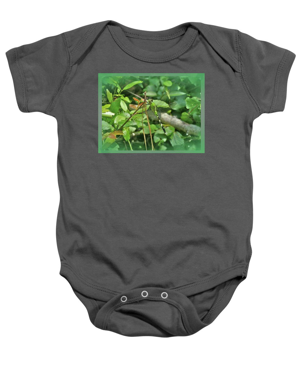 Dragonfly Baby Onesie featuring the photograph Eastern Pondhawk Female Dragonfly - Erythemis Simplicicollis - On Pine Needles by Mother Nature