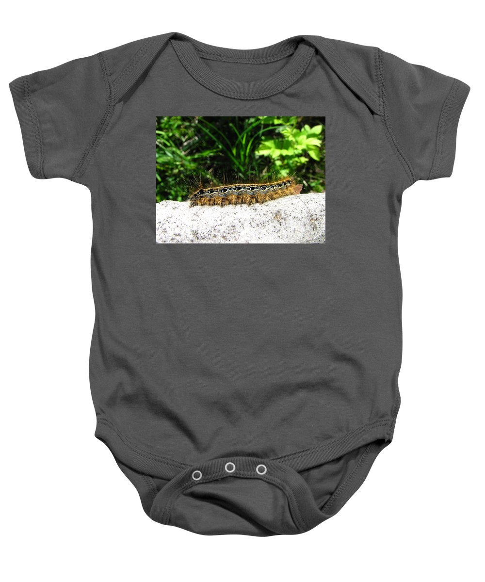 Eastern Tent Caterpillar Prints Colorful Caterpillar Prints Common Caterpillar Images Entomology Biodiversity Nature Baby Onesie featuring the photograph Eastern Tent Caterpillar by Joshua Bales