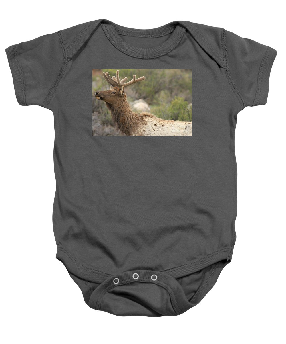 Rocky Mountain National Park Baby Onesie featuring the photograph Elk Sky Gaze by Adam Jewell