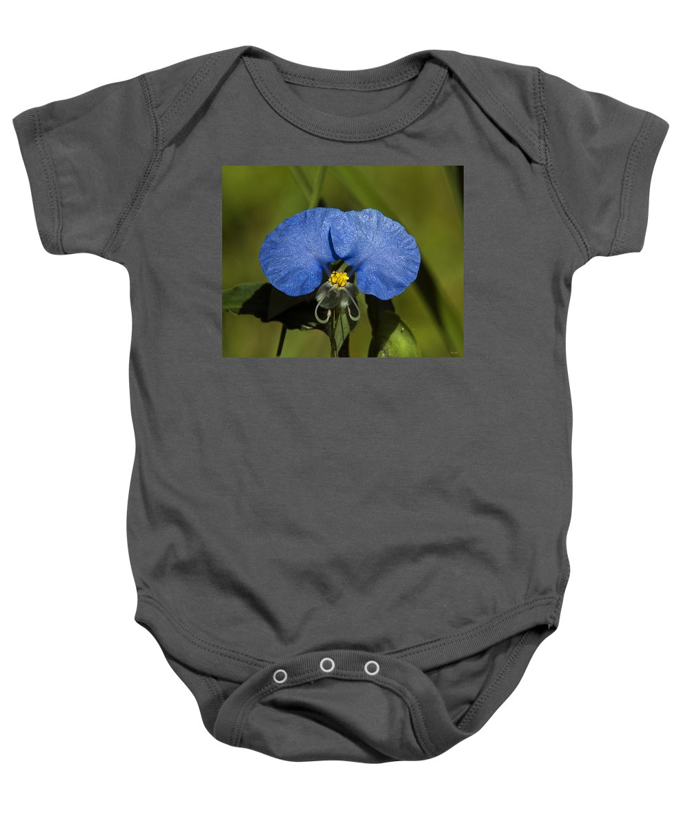 Nature Baby Onesie featuring the photograph Erect Dayflower Commelina Erecta Dsmf096 by Gerry Gantt