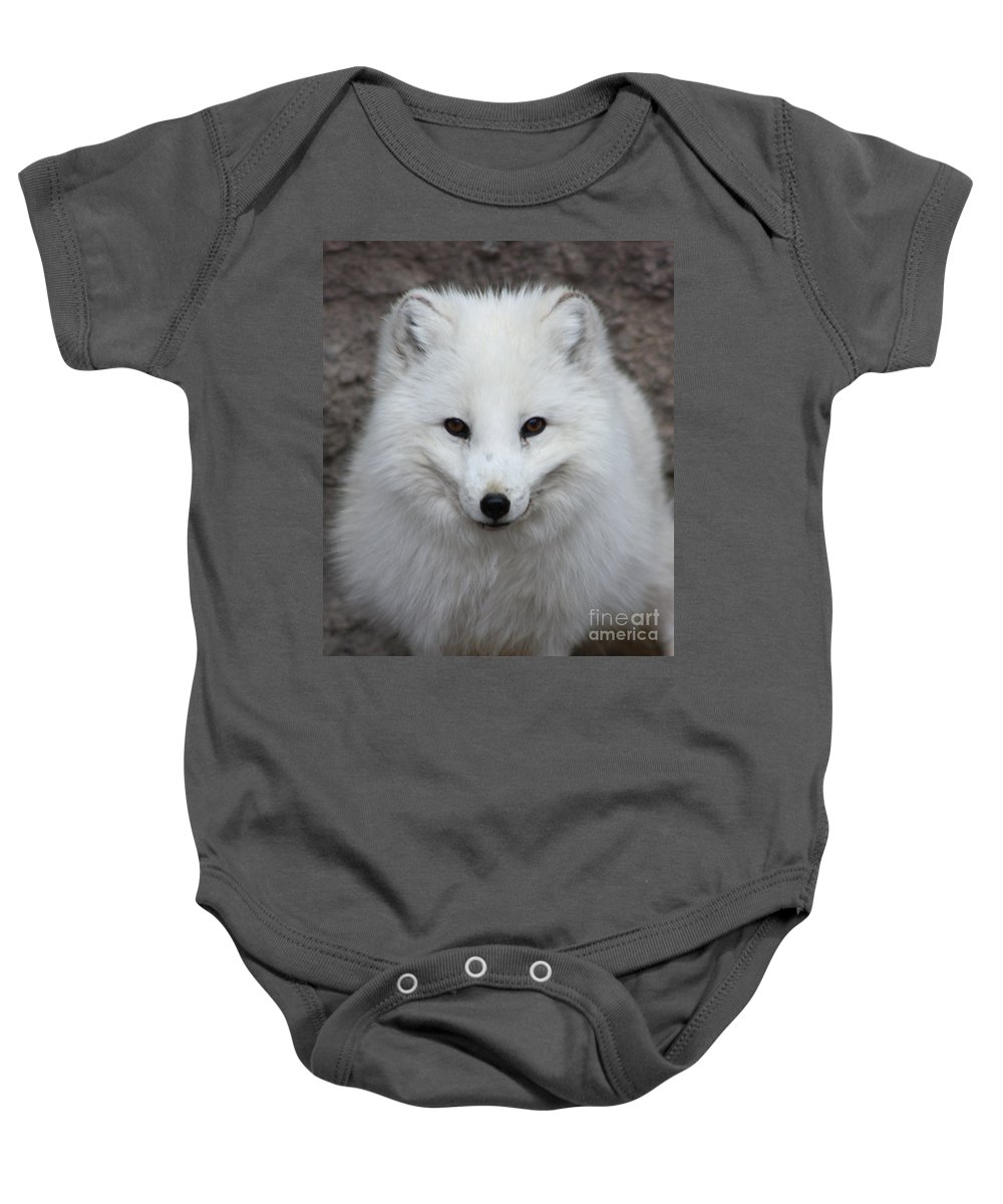 Arctic Fox Baby Onesie featuring the photograph Eyes Of The Arctic Fox by Nick Gustafson