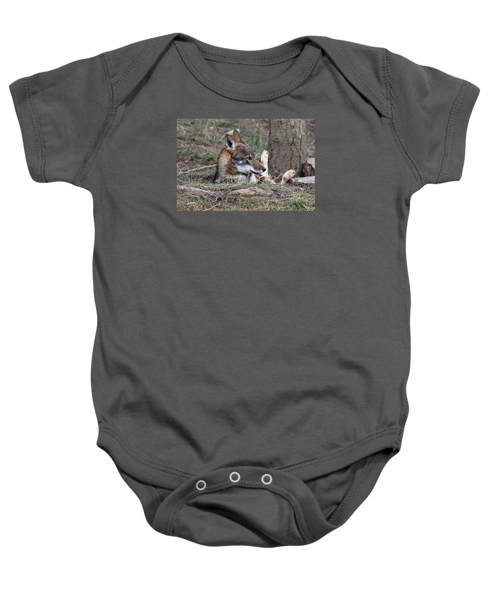 Wolves Baby Onesie featuring the photograph Fallen And I Can't Get Up by Athena Mckinzie