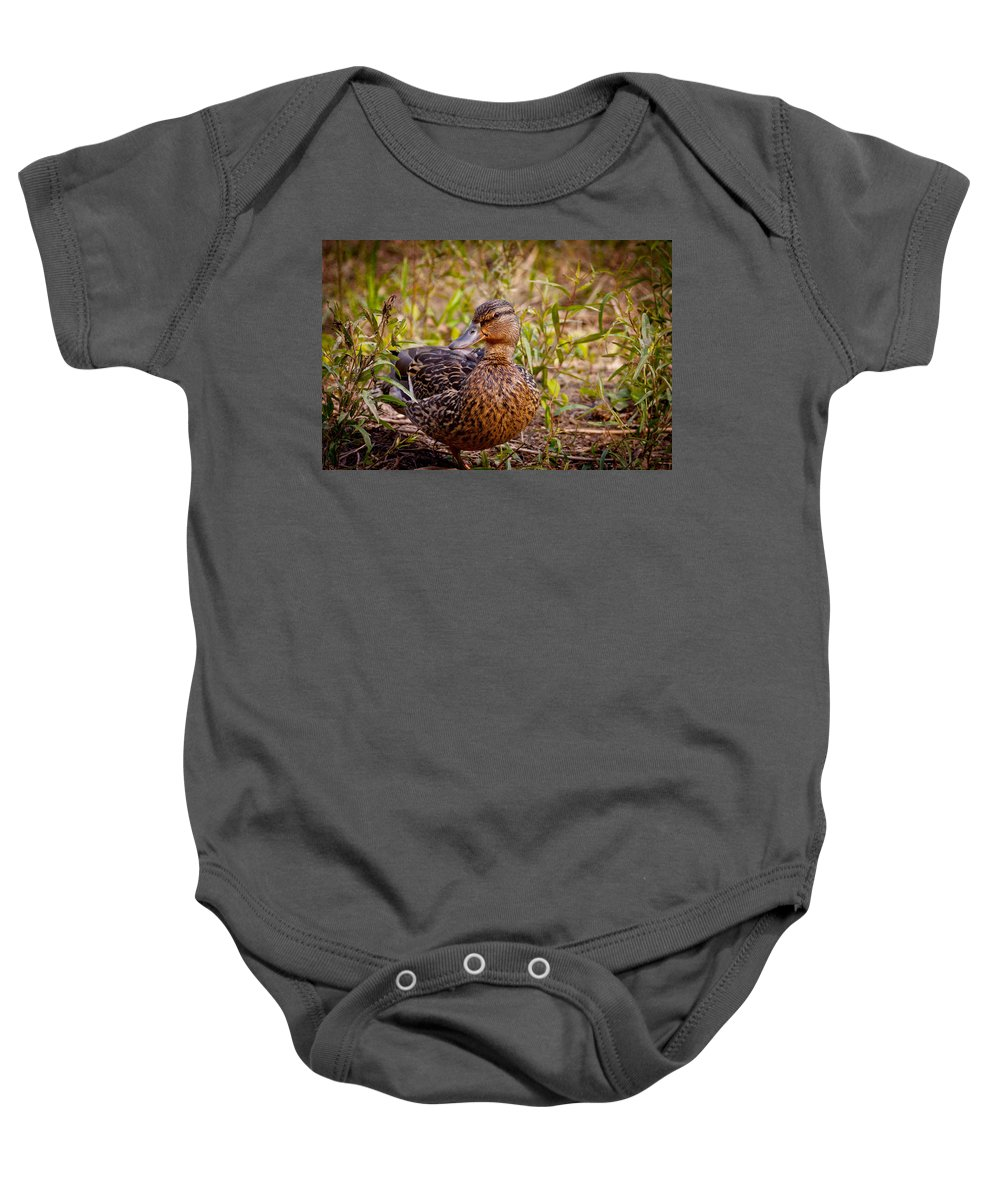 Female Baby Onesie featuring the photograph Female Mallard by Melinda Fawver