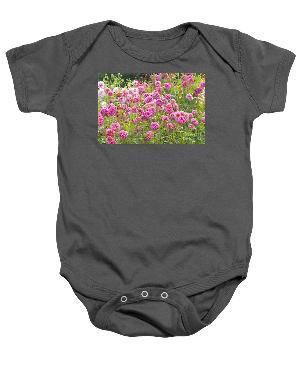 Dahlia Baby Onesie featuring the photograph Field Of Pink Dahlias by Sharon Talson