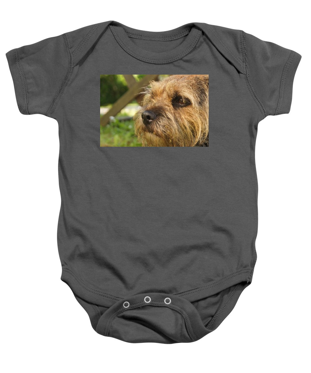 Border Terrier Baby Onesie featuring the photograph Fizzy On Al In Dorset 2010 by Simon Kennedy