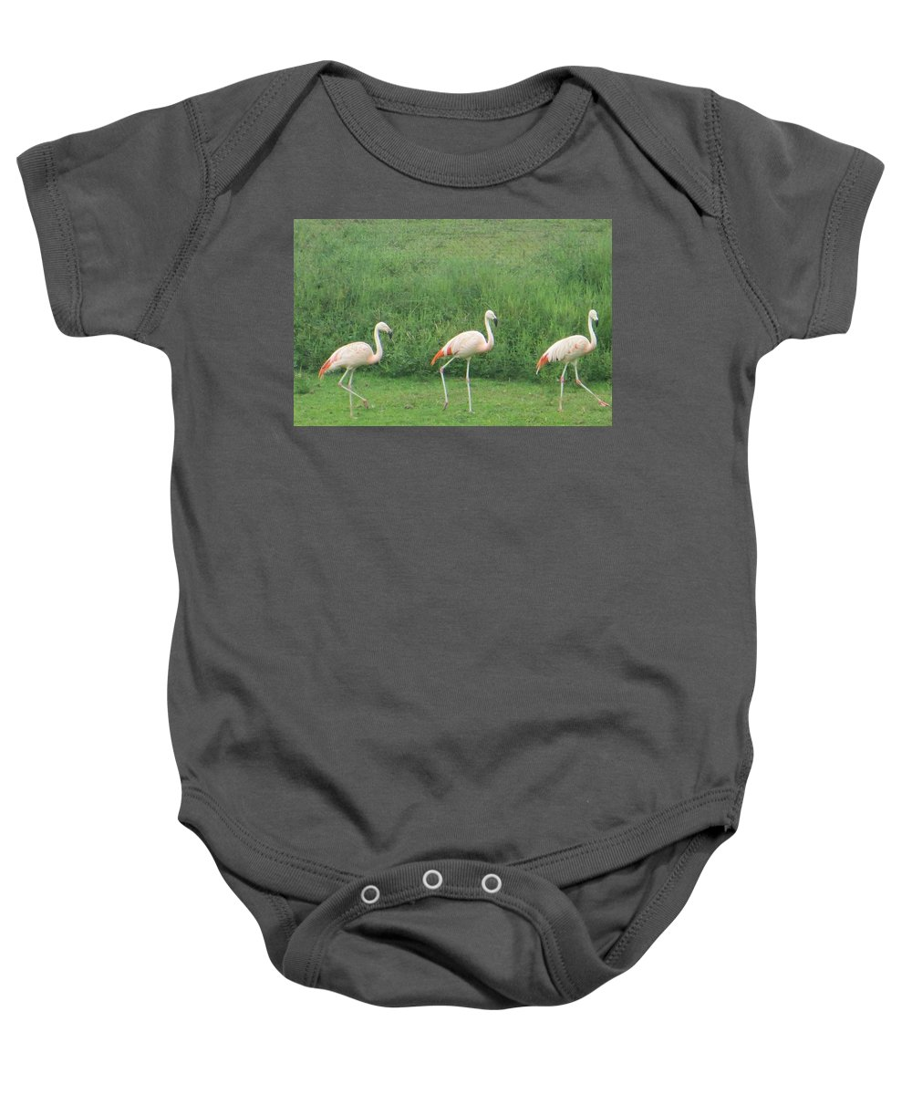 Wild Life Photography Baby Onesie featuring the photograph Flamingo March by Sonali Gangane