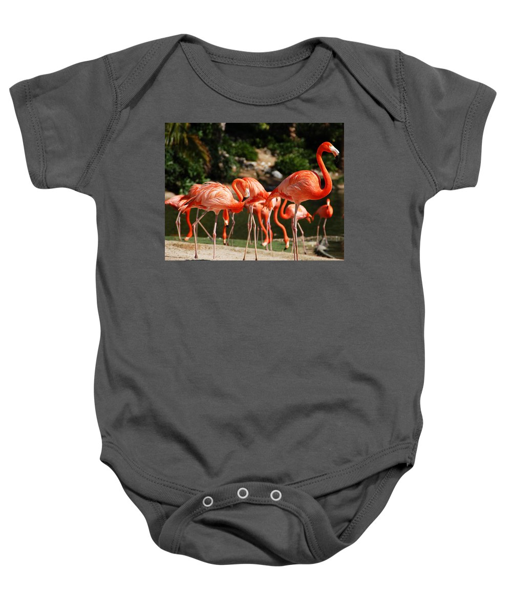 Flamingo Baby Onesie featuring the photograph Flamingos by Aimee L Maher ALM GALLERY