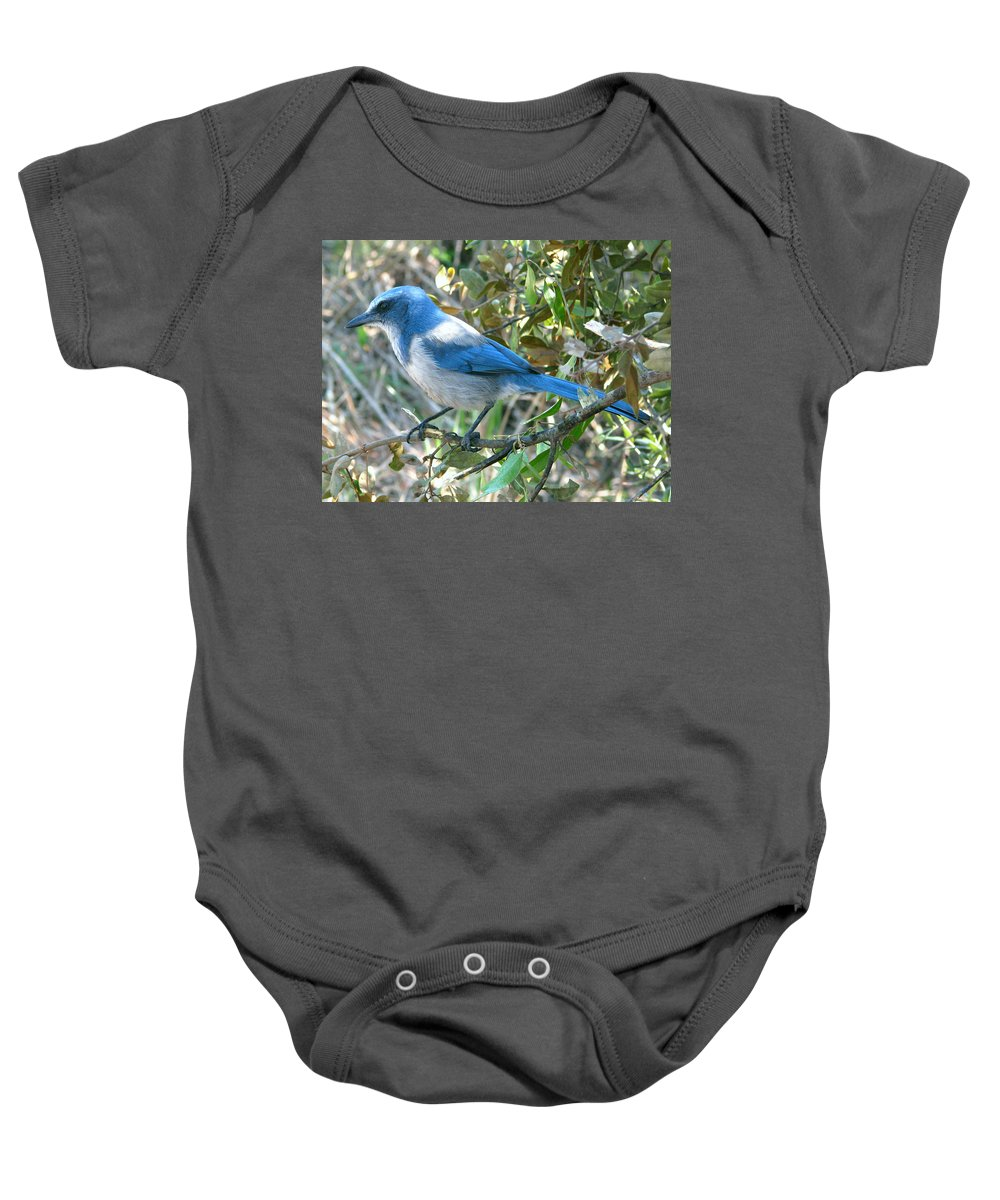 Nature Baby Onesie featuring the photograph Florida Scrub Jay by Peg Urban