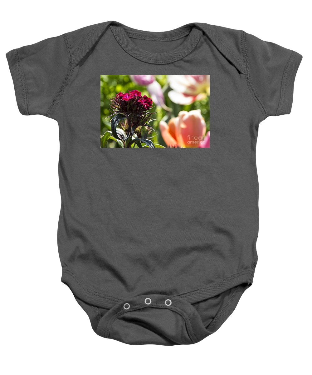 Tulips Baby Onesie featuring the photograph Flowers At Dallas Arboretum V13 by Douglas Barnard