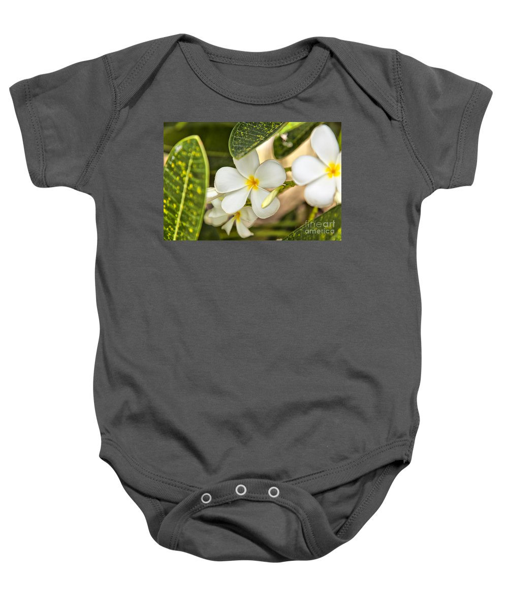 Thailand Baby Onesie featuring the photograph Frangipani Plumeria Flower by Sophie McAulay