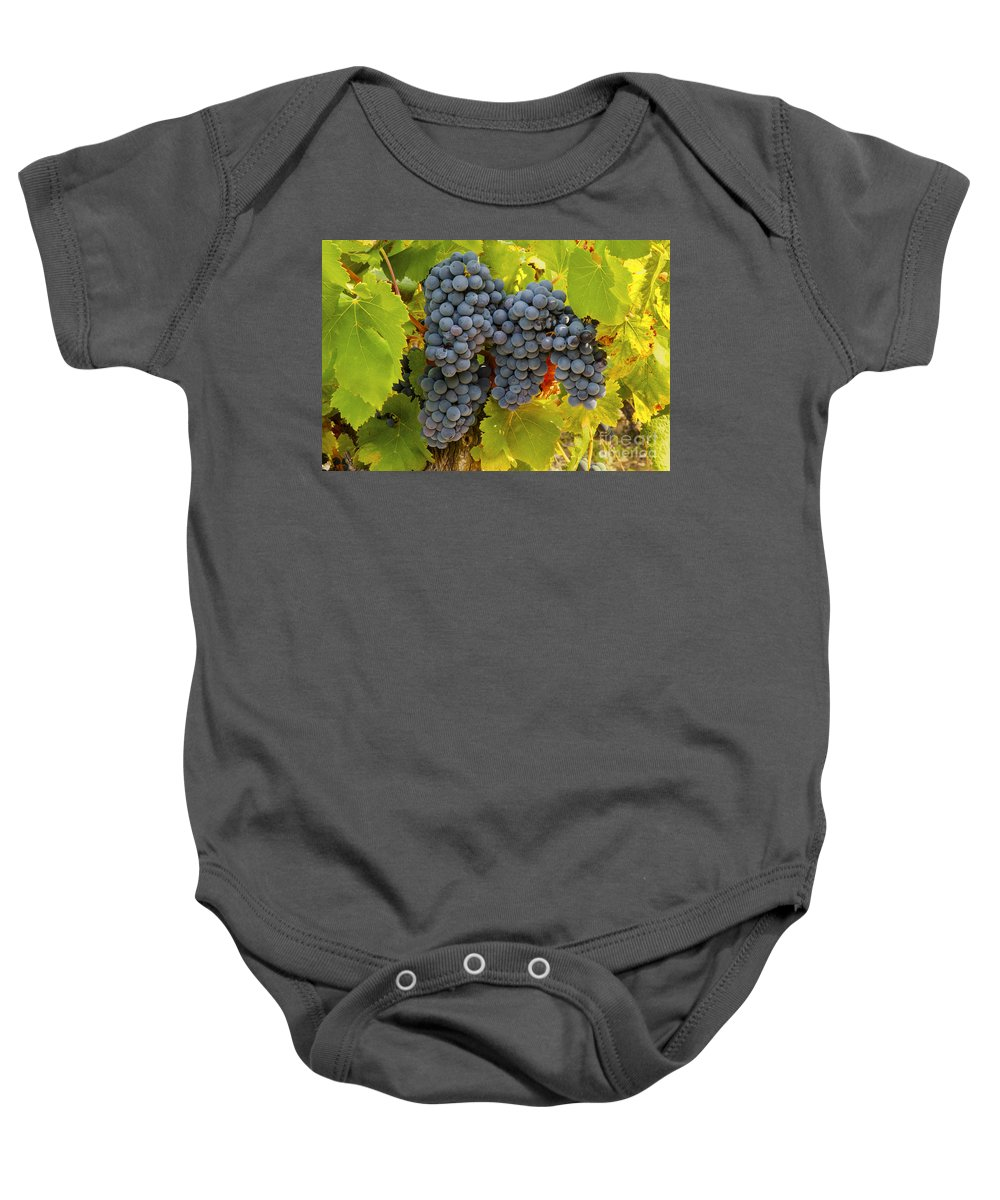 Saignon Baby Onesie featuring the photograph Fruit Of The Vine Imagine The Wine by Bob Phillips