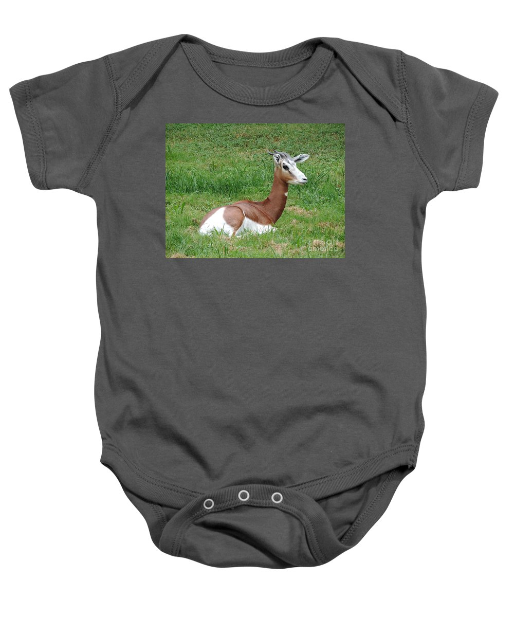 Gazelle Baby Onesie featuring the photograph Gazelle At Rest 1 by Heather Jane