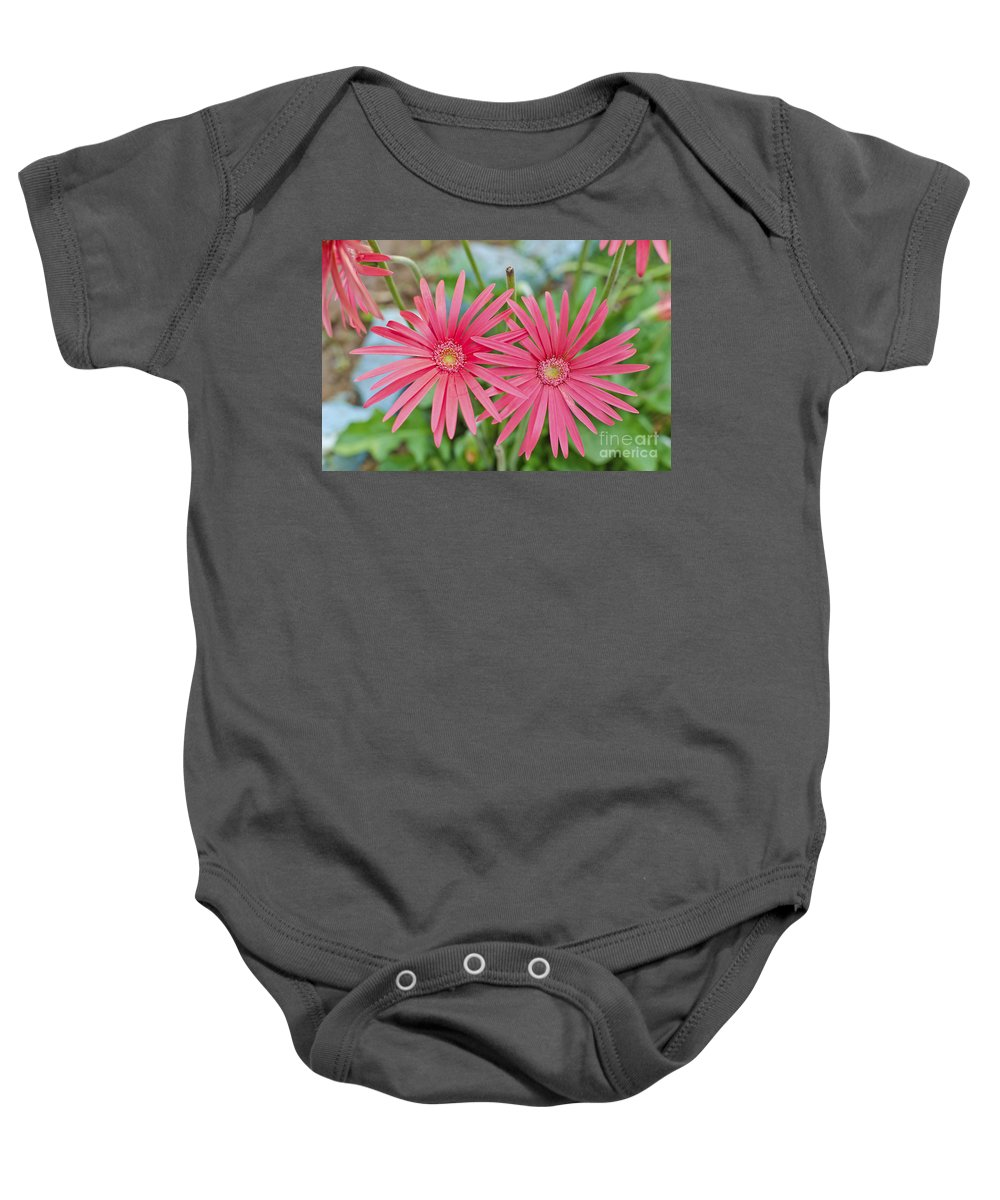 Flower Baby Onesie featuring the photograph Gerbera Jamesonii / Pink Daisy Flowers by Image World