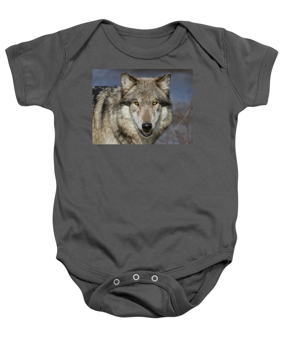 Nature Baby Onesie featuring the photograph Gray Wolf Portrait by Martin Belan
