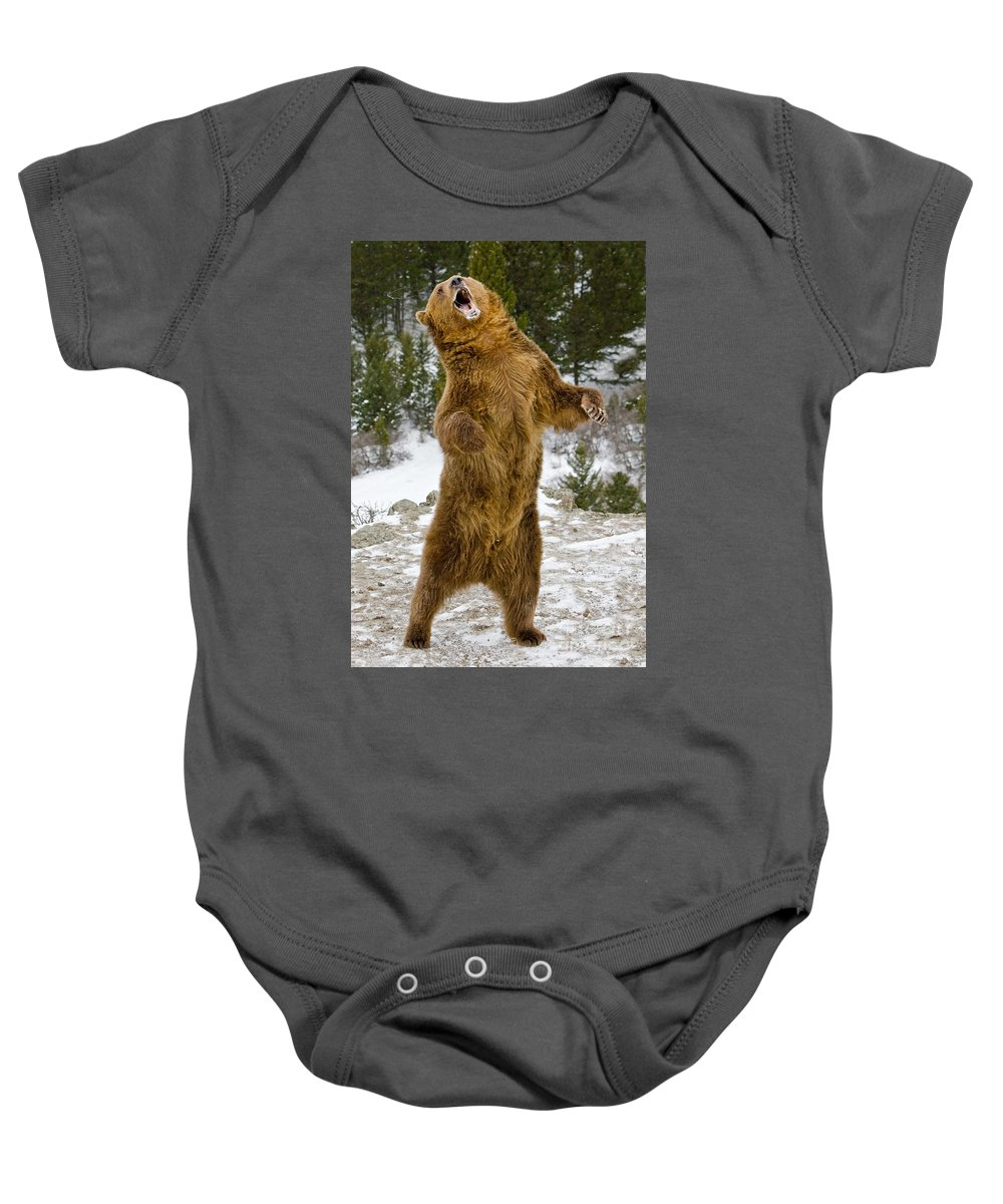 Grizzly Bear Baby Onesie featuring the photograph Grizzly Standing by Jerry Fornarotto