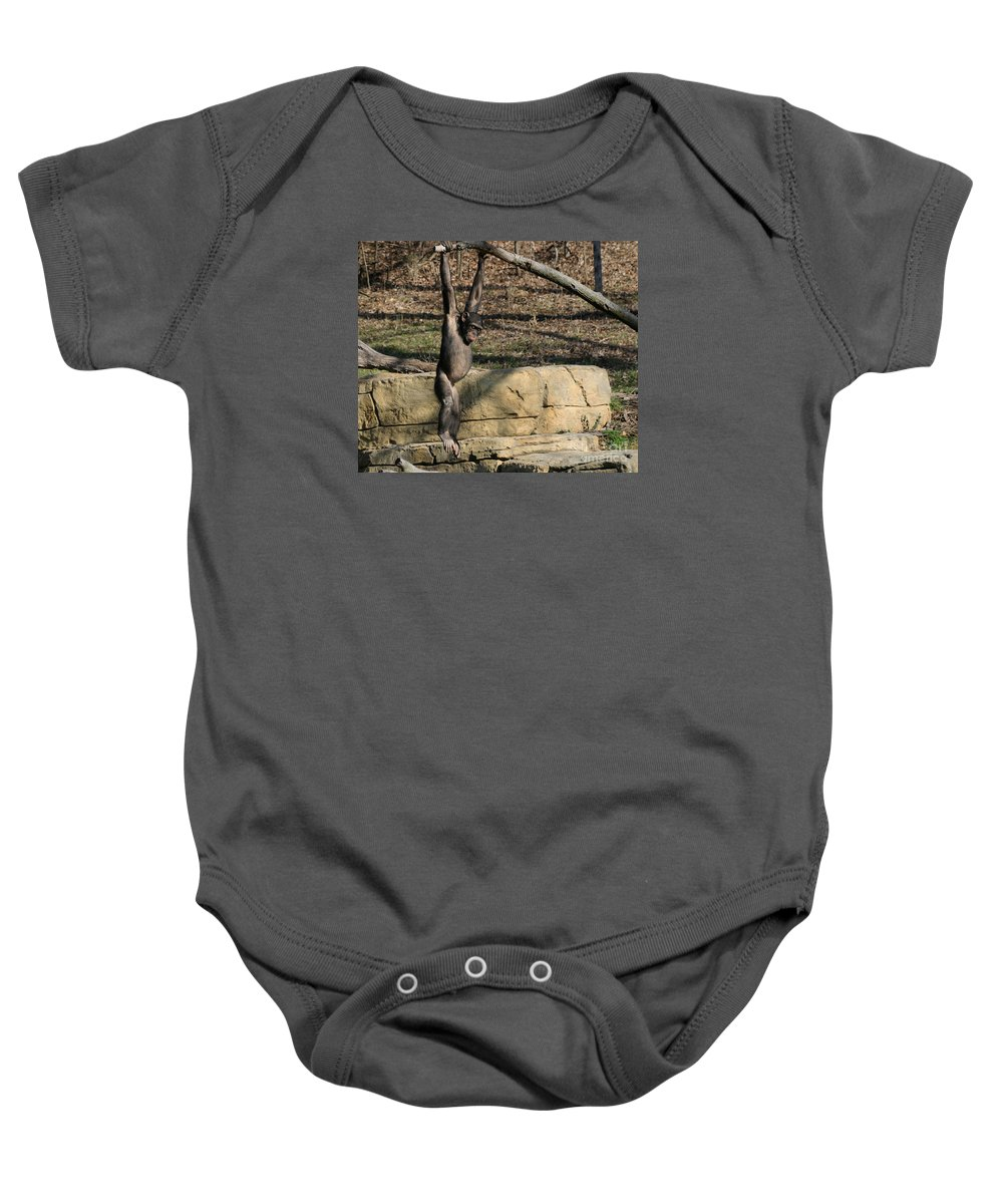 Chimpanzee Baby Onesie featuring the photograph Hanging Chimp 365 by Gary Gingrich Galleries