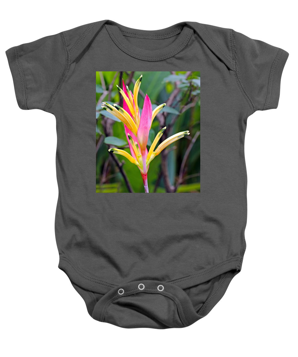Outdoor Baby Onesie featuring the photograph Heliconia Psittacorum by Paul Fell