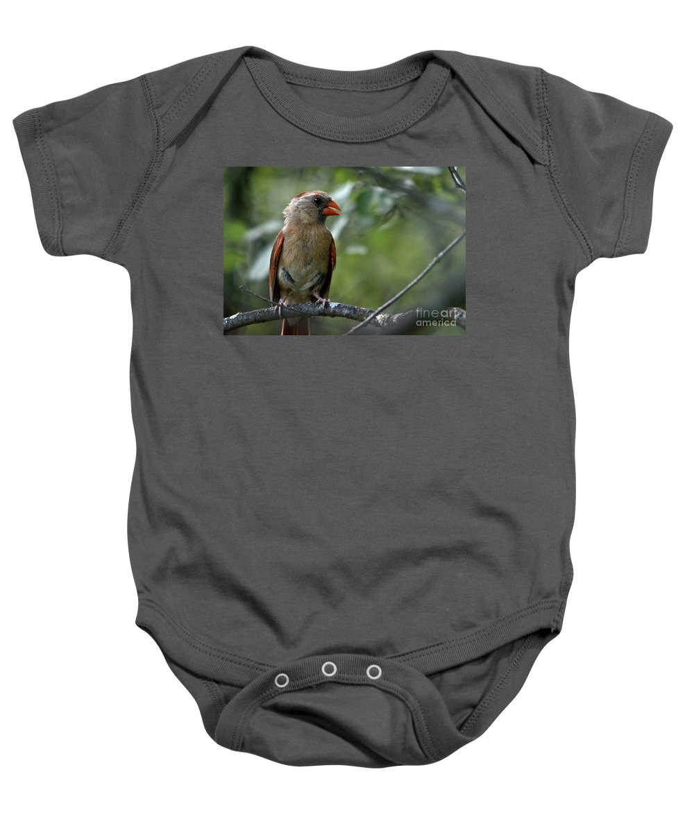 Cardinal Baby Onesie featuring the photograph Hello Young Cardinal by Cheryl Baxter