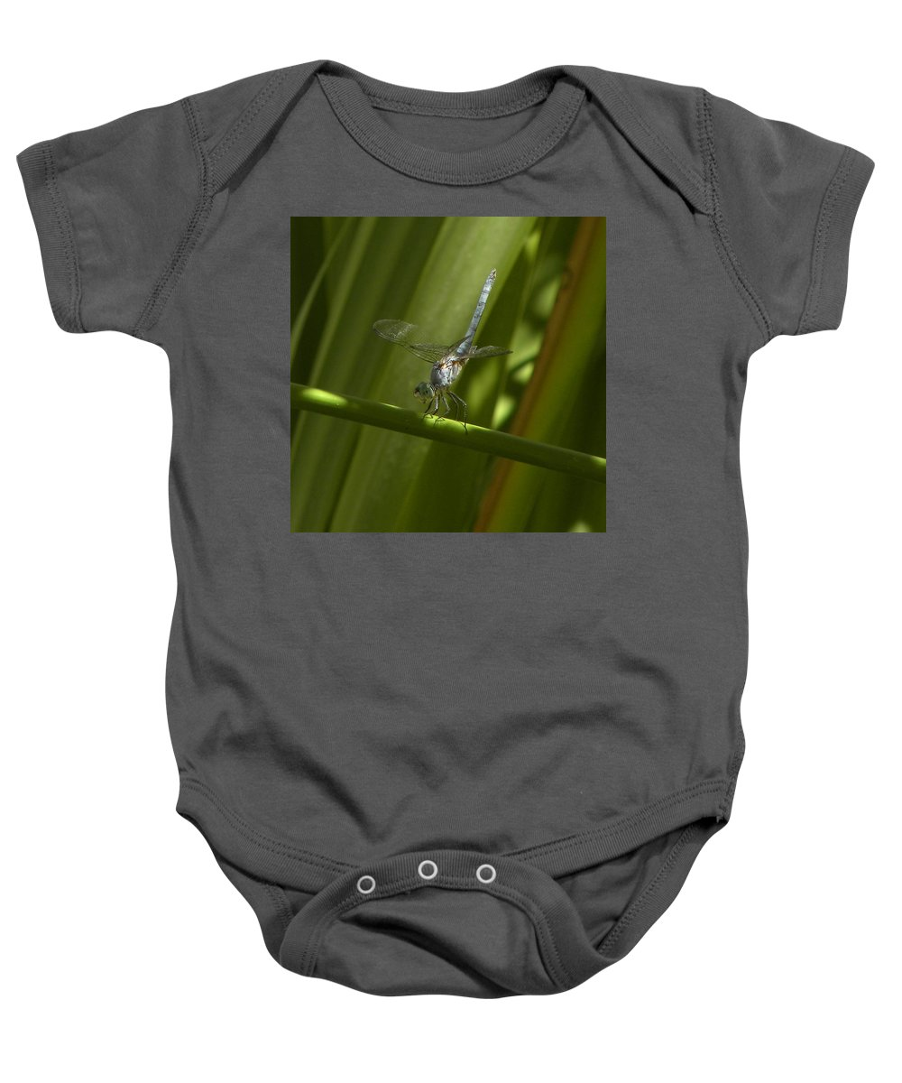 Blue Dragon Fly Baby Onesie featuring the photograph Hold On by John Wilson