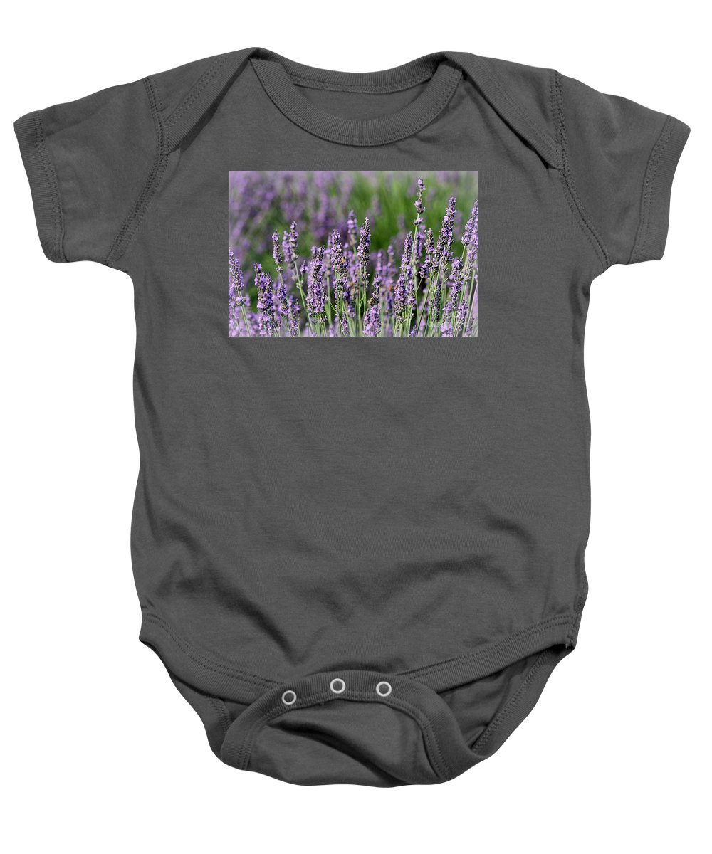 Lavender Baby Onesie featuring the photograph Honeybees On Lavender Flowers by Catherine Sherman
