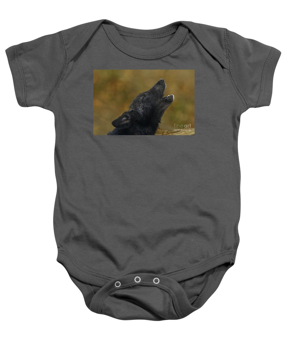 Gray Wolf Baby Onesie featuring the photograph Howling Gray Wolf Pup Endangered Species Wildlife Rescue by Dave Welling