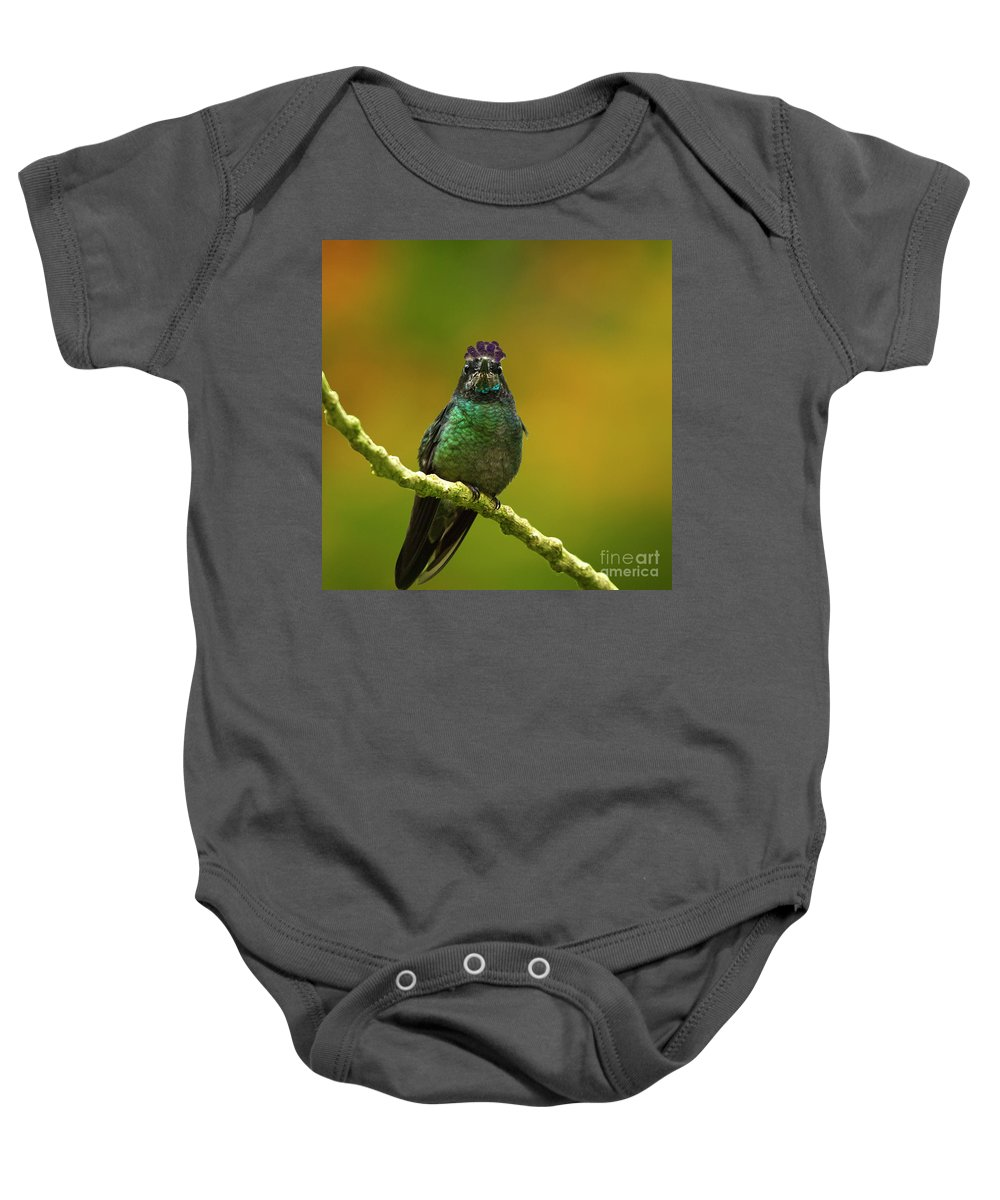 Magnificent Hummingbird Baby Onesie featuring the photograph Hummingbird With A Lilac Crown by Heiko Koehrer-Wagner