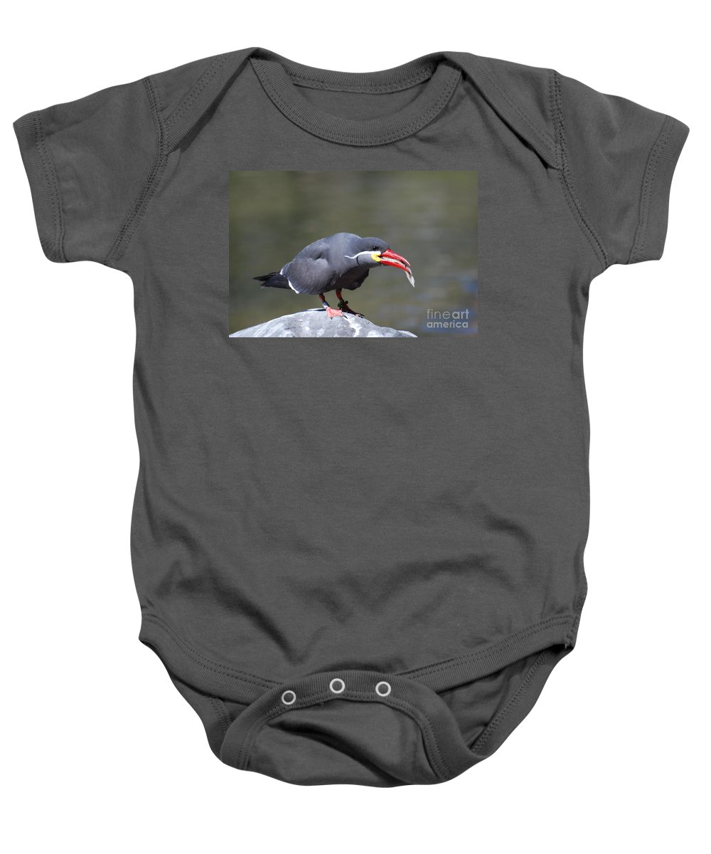 Inca Tern Baby Onesie featuring the photograph Inca Tern With A Fish by DejaVu Designs