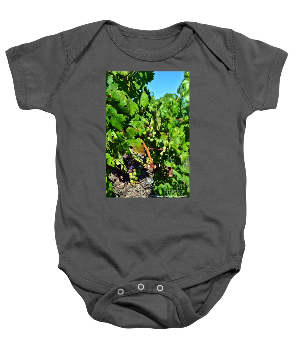 Inglenook Vineyard Baby Onesie featuring the photograph Inglenook Vineyard -10 by Tommy Anderson