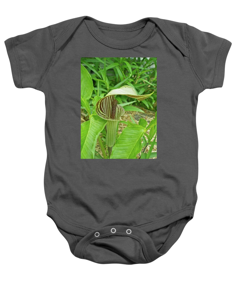 jack-in-the-pulpit Baby Onesie featuring the photograph Jack In The Pulpit - Arisaema Triphyllum by Mother Nature