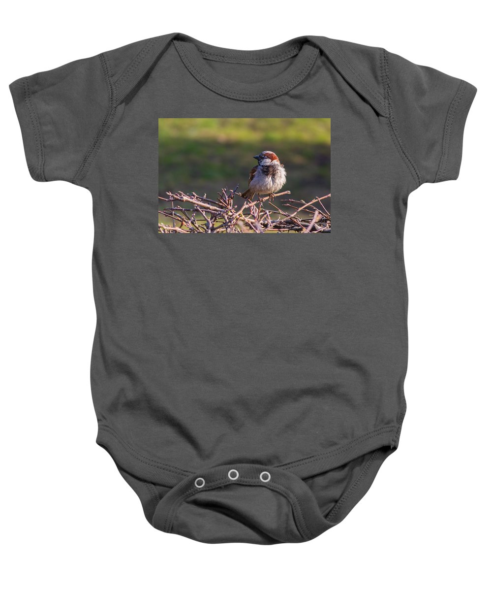 Adorable Baby Onesie featuring the photograph Just Made It Through The Winter - Featured 3 by Alexander Senin