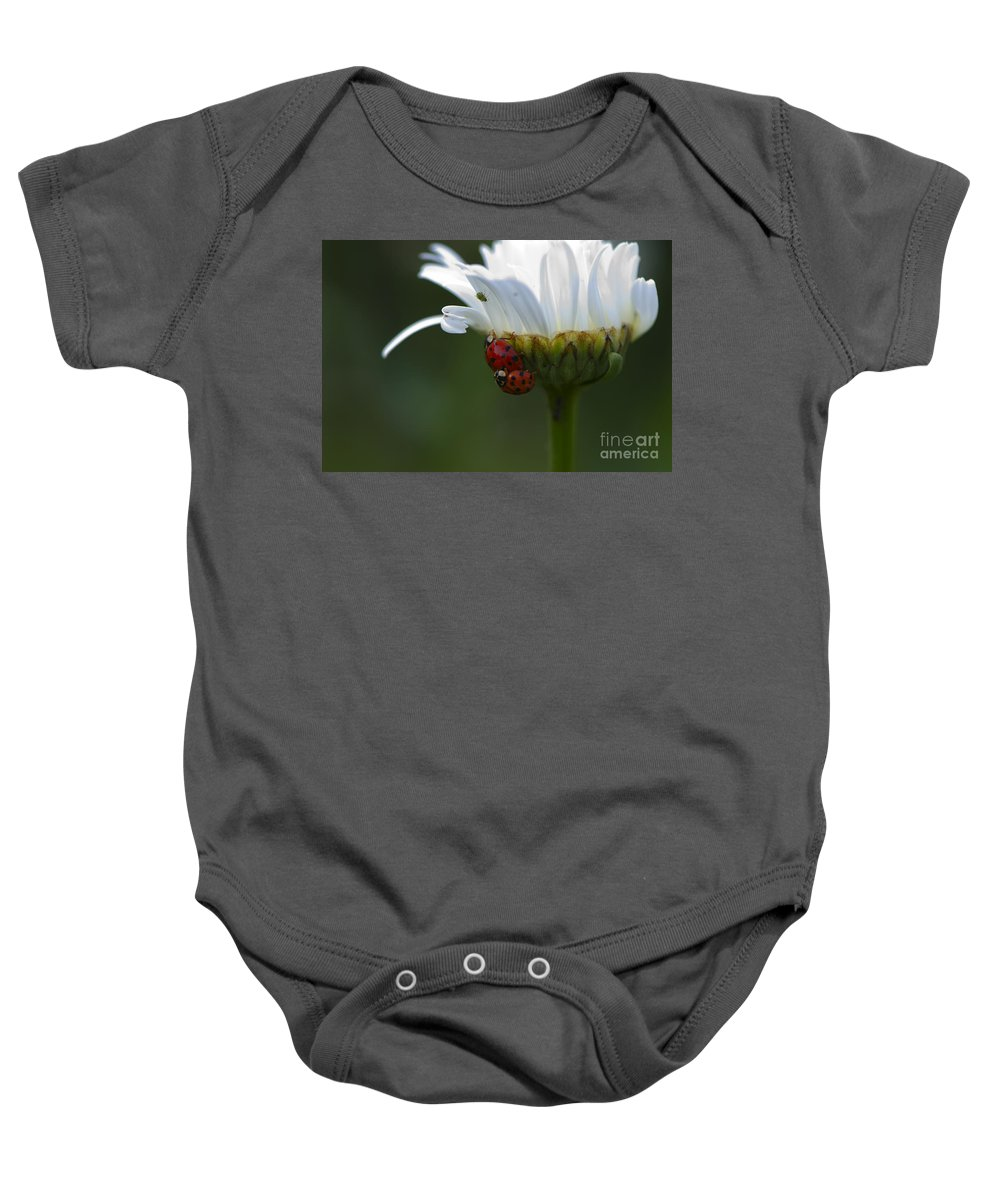 Ladybugs Baby Onesie featuring the photograph Ladybugs On Shasta Daisy by Sharon Talson