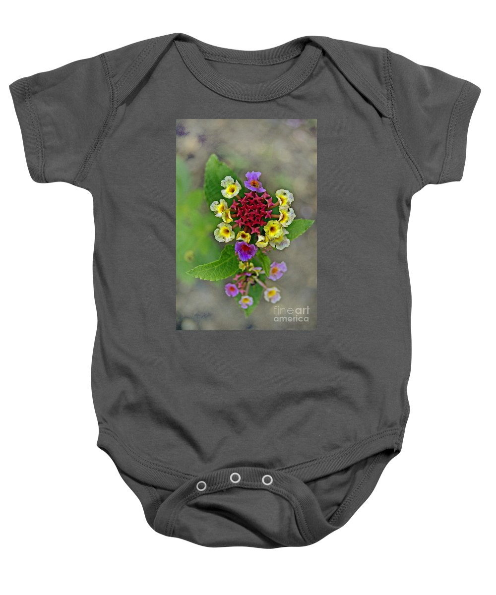 Pictures Of Flowers Baby Onesie featuring the photograph Last Blooms Number Two by Skip Willits